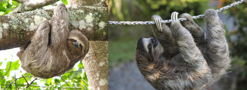 slothPair